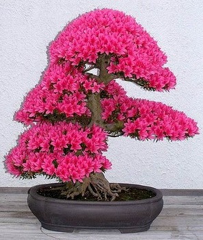 bonsai-tree-07.jpg