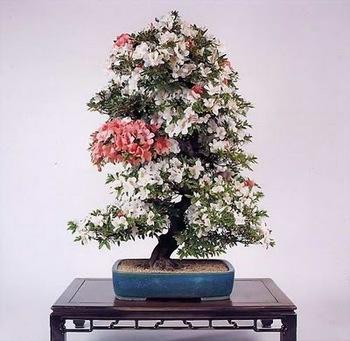 bonsai-tree-17.jpg