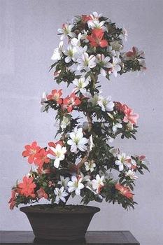 bonsai-tree-33.jpg