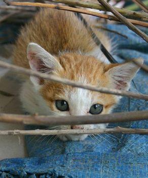 kitties_36.jpg